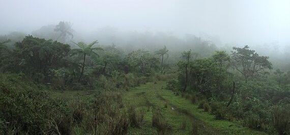 Rainforest_main_2